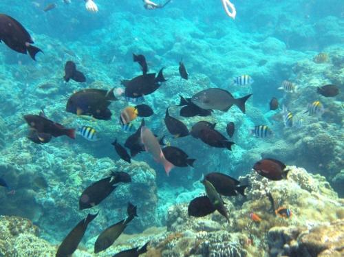 たくさんの魚の群れ