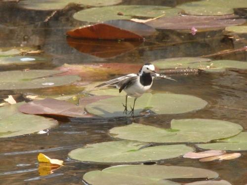 金門では野鳥観測も楽しめる