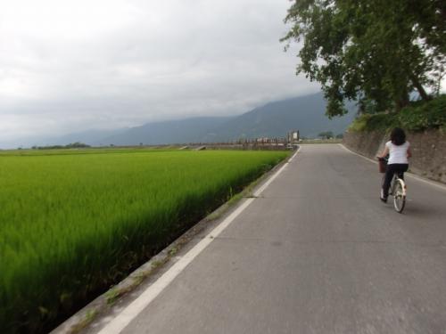 稲穂香る台東・池上 田んぼの間をサイクリング