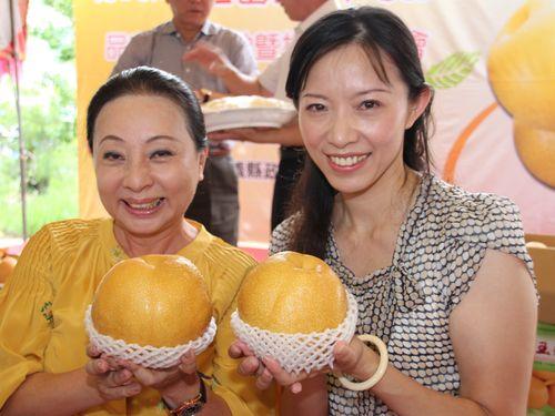 """台湾と日本が""""生んだ""""寄せ接ぎ梨、市販へ  美味しさが評判"""