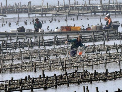 台湾でも台風30号の被害  養殖カキに約17億円規模の損害