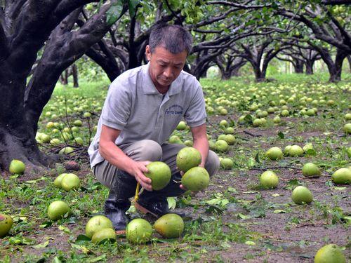 台風10号による農業被害額 17億円超える/台湾