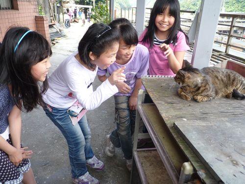"""台湾・台北近郊の""""猫村""""に獣医出動  避妊手術やワクチン注射で健康支援"""
