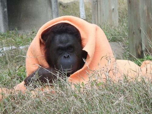 寿山動物園提供
