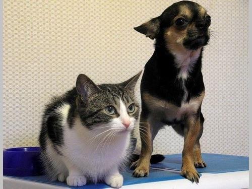 犬・猫へのマイクロチップ埋め込み義務化へ  ペットの権利保護強化/台湾