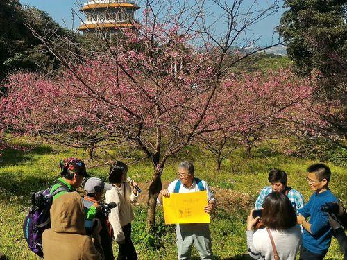 日本の樹木医、台湾で桜植栽のコツを伝授