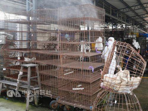 鳥インフル、被害拡大 ニワトリなど8000羽を殺処分/台湾