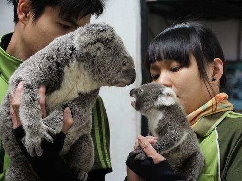 右から蒂蒂、母親のエミリー=台北市立動物園提供