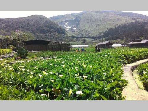 台北・陽明山のカラー