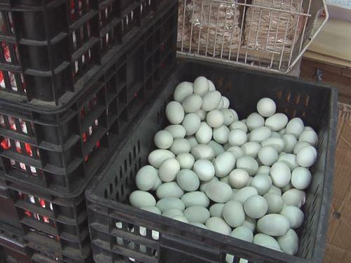 食用卵から基準値超えのダイオキシン検出 台湾で初 6242キロが販売停止