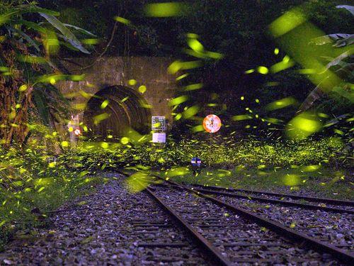 阿里山森林鉄路が蛍の光に包まれる まるで銀河鉄道の世界/台湾