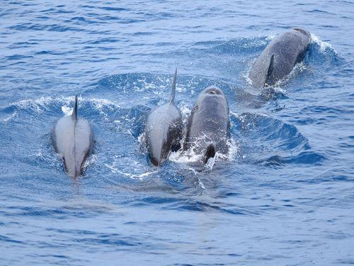 多羅満賞鯨提供