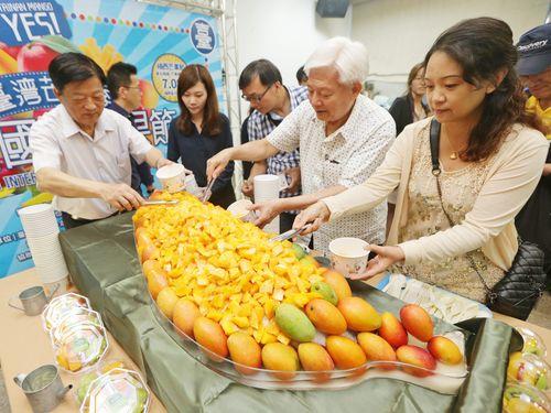台南のマンゴーが豊作  月末からはマンゴー祭りも/台湾