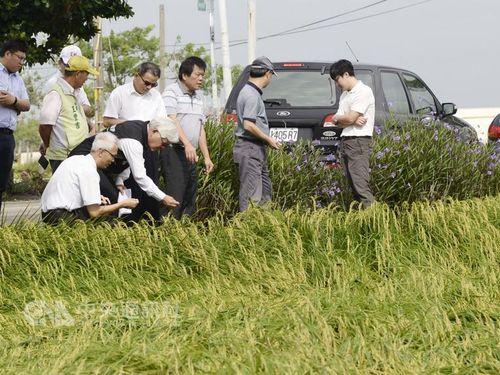 豪雨による農業被害、6日間で約3700万円  中部・雲林で最多/台湾