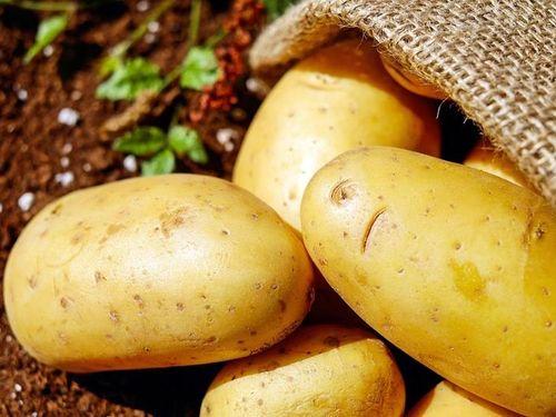 米国産の遺伝子組み換えジャガイモ輸入  台湾で懸念の声