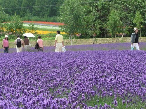 夏に行きたい場所1位は「北海道」=訪日リピーターの台湾人女性に調査