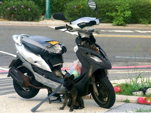飼い主が交通事故に…壊れたスクーターの前で帰り待つ小犬/台湾