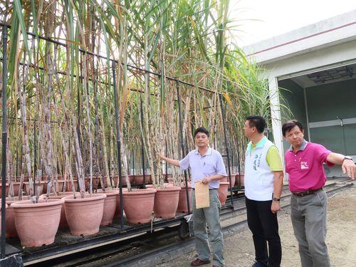 日本統治時代開設の育種場でサトウキビフェス  文化や歴史を紹介/台湾