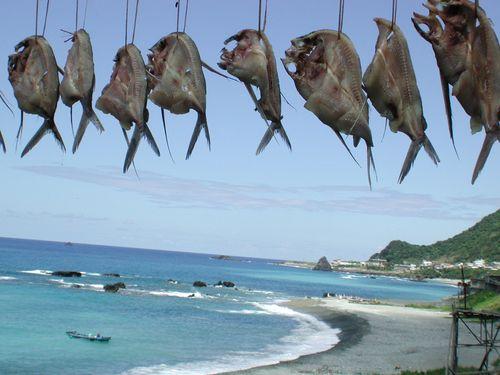 3月に始まる蘭嶼のトビウオ漁