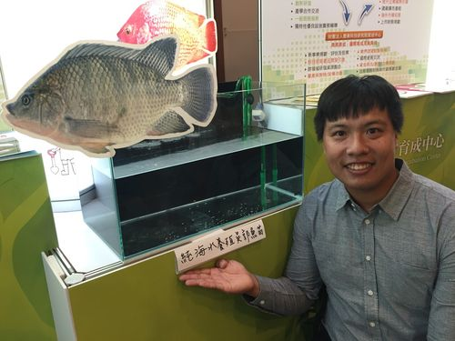 海水で養殖できる水槽内のティラピアの稚魚
