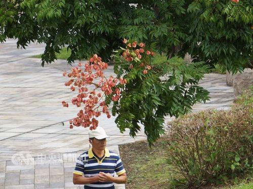15日の台湾北部や東部・宜蘭、花蓮では過ごしやすい一日になる見込み