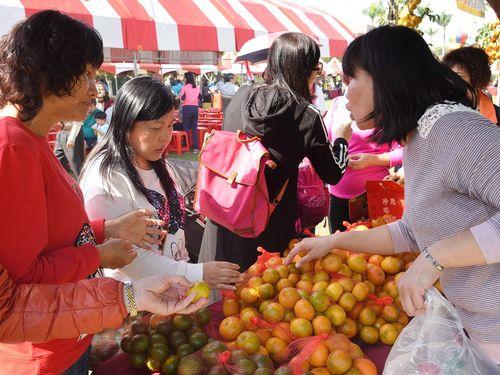 旬を迎えている南投・中寮産の柑橘類「真珠柑」=南投県政府提供
