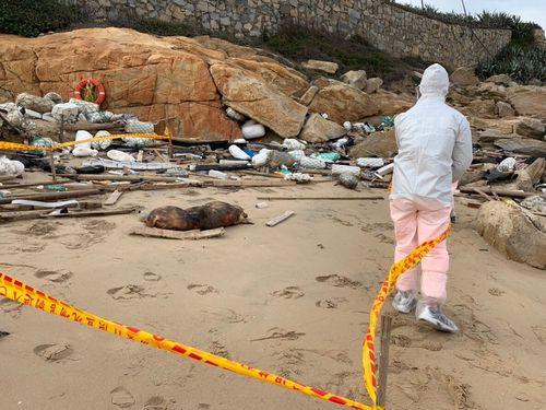 豚の死骸の発見現場=金門岸巡隊提供