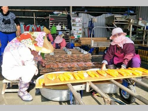 台南のカラスミ加工業者