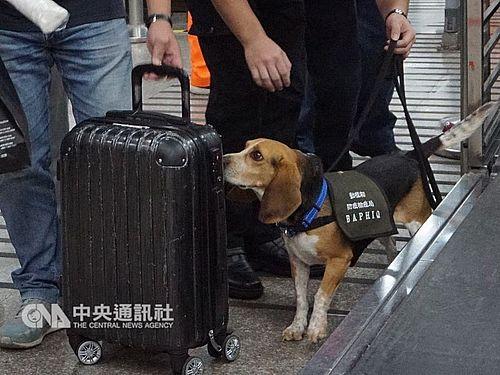 動植物検疫探知犬=資料写真