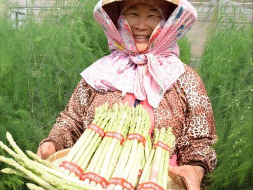 台南産アスパラガス(資料写真)=台南区農業改良場提供