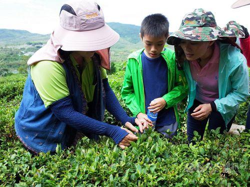 茶摘みを体験する人々=墾丁国家公園管理処提供