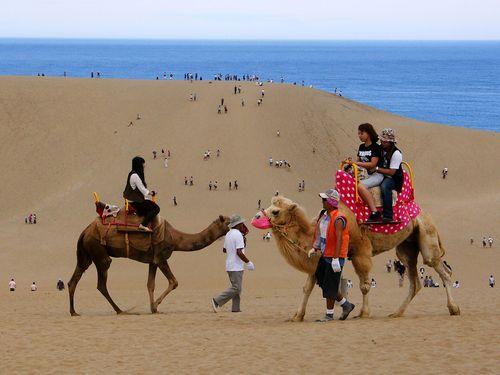 鳥取砂丘でらくだ乗り体験を楽しむ人々=マンダリン航空提供
