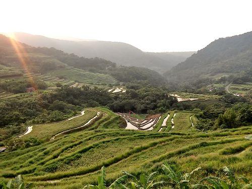 台湾で唯一!石積みの棚田