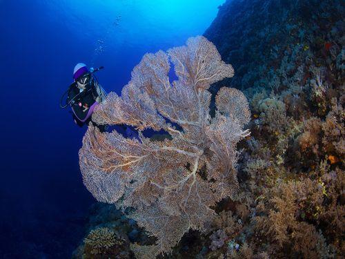 うっとりするほどきれい…世界で活躍する水中写真家が撮った緑島