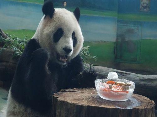 パンダの「円仔」、新年のごちそうにご満悦♪