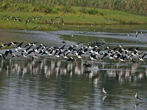 台湾北部有数の野鳥の楽園、今が見ごろ