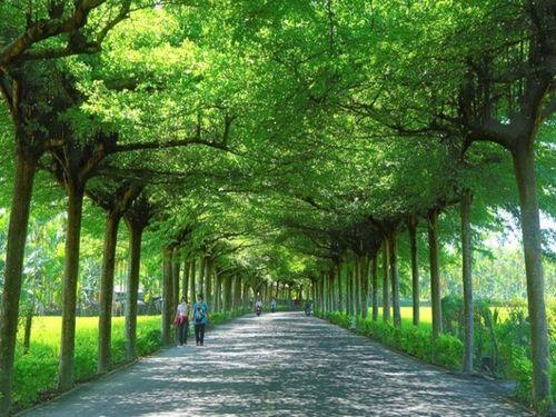 美しい緑のトンネル すぐそばには警察が作った公園も
