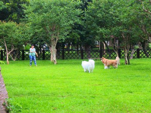 台北市初の木造犬プレイパーク、供用開始!