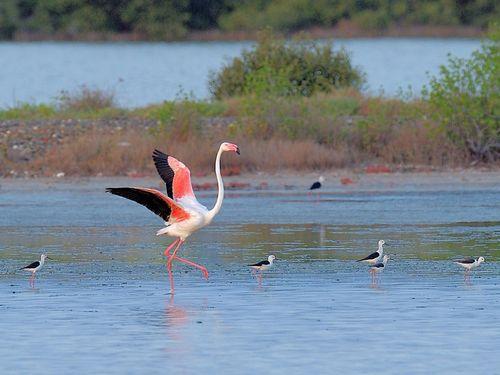 高雄の永安湿地に珍客飛来…