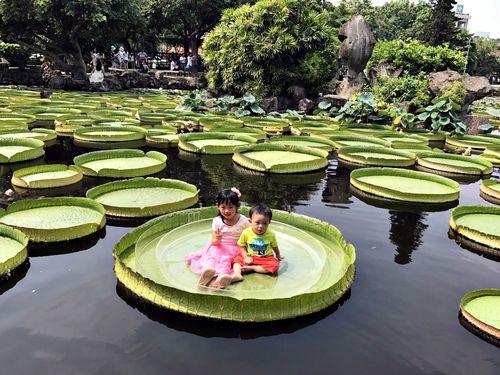 台北市内でオオオニバスに乗るイベント、今年で最後か