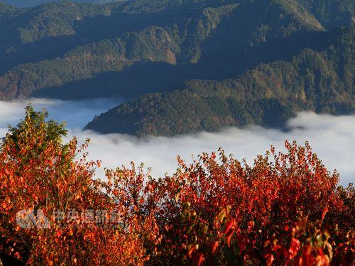 阿里山で昼は紅葉、夜は天体観測楽しむガイドツアー