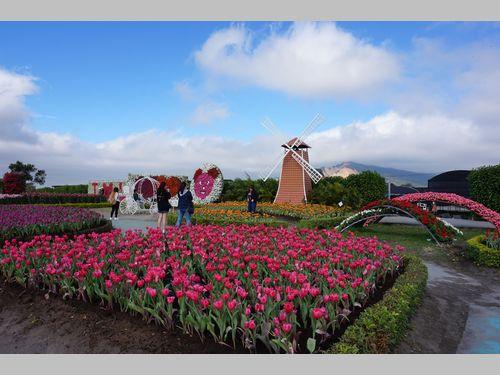 台湾で欧州気分を味わえるチューリップ祭り 色とりどりの花の供宴