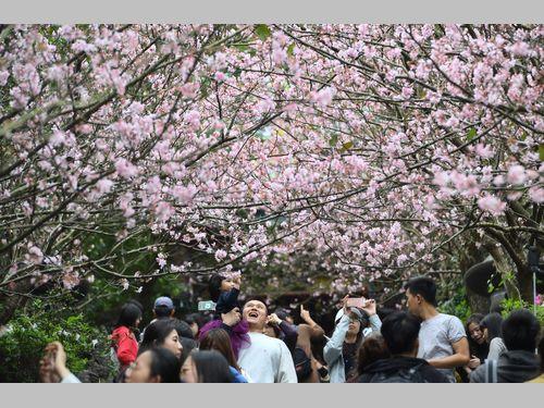 花見客でにぎわう台北市の景勝地