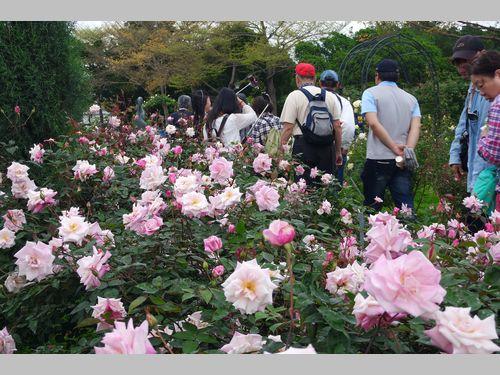 バラの香りに包まれて台湾の春を満喫