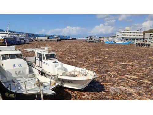"""漁港に流木ぎっしり、まるで""""木の海"""" 台風が過ぎ去った後"""