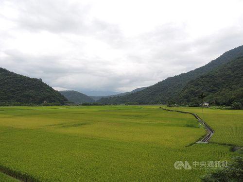 花蓮の先住民集落で生産された有機米、地元の小学校に提供