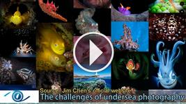 The challenges of undersea photography
