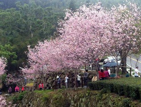 Spring trip to Alishan, southern Taiwan