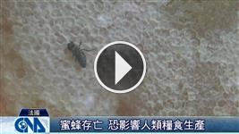 法禁用害蜂農藥 推友善護蜂
