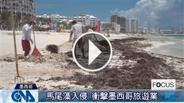 馬尾藻入侵 衝擊墨西哥旅遊業